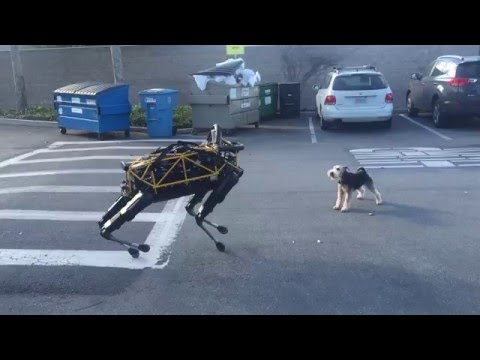 Fido vs Spot Real Dog Vs Robot Dog