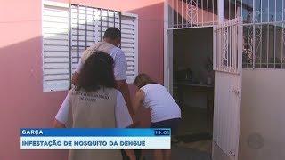 Alto índice de larvas do Aedes Aegypti coloca Garça em estado de alerta