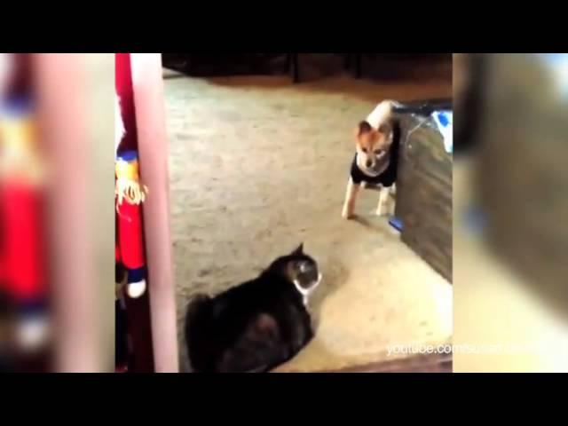 Khi mèo làm đại ca