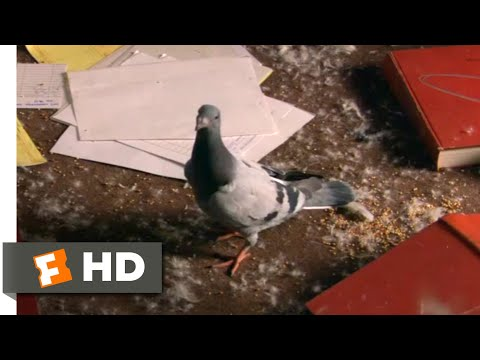 How High (2001) - Exploding Pigeons Scene (8/10) | Movieclips