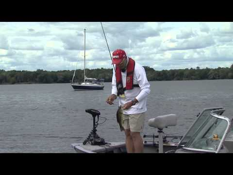 Largemouth Bass Shoreline Weeds Crankbait Stragety.