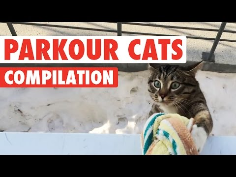 This Compilation Proves That Cats Are the True Masters of Parkour