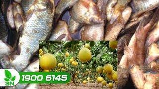 Trồng trọt | Trồng cây ăn quả sau bao lâu thì bón được phân cá và đậu tương?