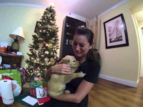 VIRAL: Husband Surprises Wife With New Puppy After Her Dog Passed Away!