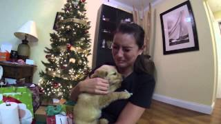 The day after her dog passed away, I surprised her with a new puppy for Christmas. She was overwhelmed with emotion. Keep up ...