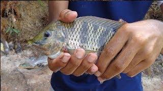 Pescaria Na Represa Billings Tilapia, Cará E Bagre