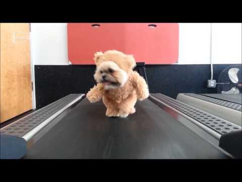 Vestido de ursinho, cão faz sucesso na internet; veja vídeo