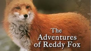 ♡ Audiobook ♡ The Adventures of Reddy Fox by Thornton W. Burgess ♡ A Classic Children's Story
