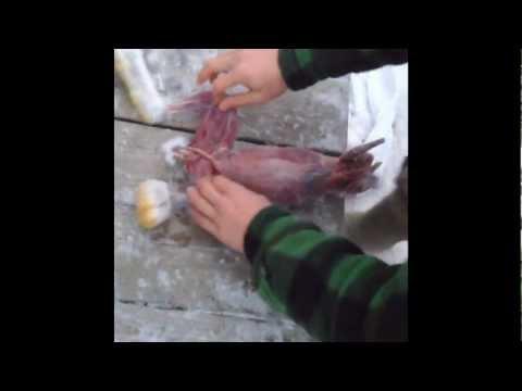 Comment dépecer et arranger un lièvre à la hache