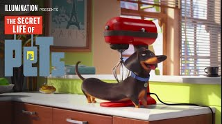 The Secret Life of Pets - Meet Buddy (HD) - Illumination full download video download mp3 download music download