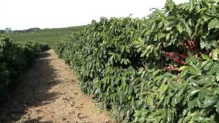 VÍDEO: Emater-MG garante investimentos para a cafeicultura familiar no Leste e Sul de Minas