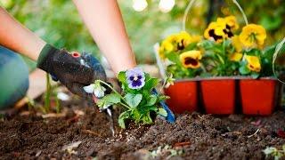Hypnosis Exercise:  Gratitude Garden