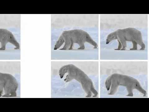 Frozen Planet trailer - Alastair Fothergill