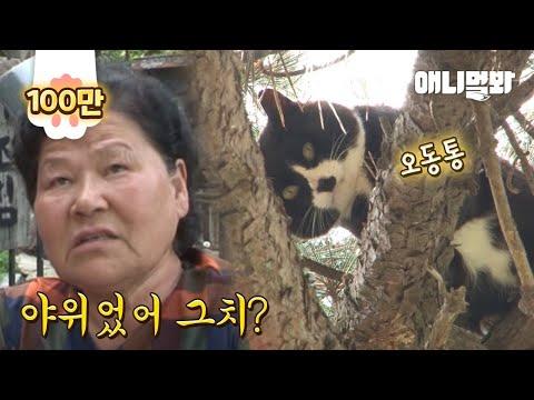 10m 나무 위에 살아도 뚱냥이 만드는 할매들의 위엄ㅋㅋ l Cat Living On Top Of A 10m-Tree For 2 Months?!