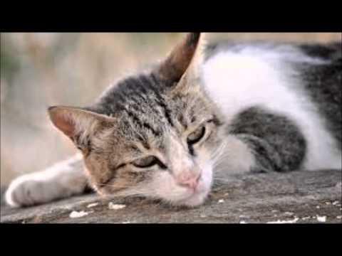 Ποιος σας είπε ότι οι γάτες δεν παθαίνουν κατάθλιψη;