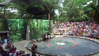 Pasuruan Indonesia  city pictures gallery : PERTUNJUKAN GAJAH TAMAN SAFARI INDONESIA II PASURUAN INDONESIA