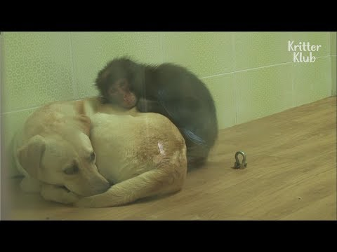 Monkey And A Dog Become Life Companions | Kritter Klub