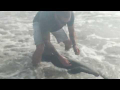 Pescador em beira de praia fisga tubarão branco por engano
