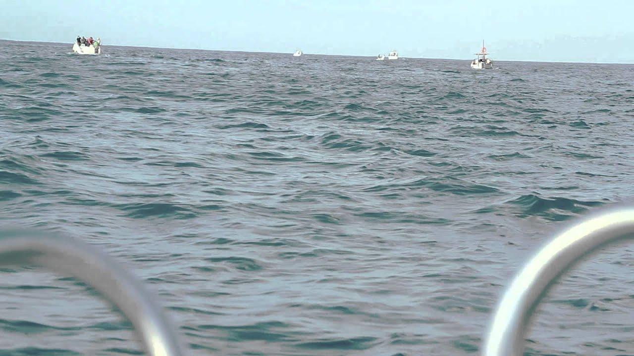 XIV Campionat de Pesca Cala Galdana