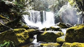 Soothing acoustic guitar, relaxing concentration music for studying and focus with calming HD video of forest and waterfall, music for study, work and concentration.More Relaxing Study Music: https://www.youtube.com/playlist?list=PLYwFNfjiOd7Ojwi-fjCHxemjuLhVoy-v1#studymusic#concentrationmusic