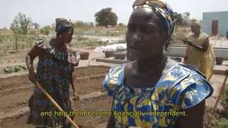 In Senegal, deforestation and rising temperatures have exacerbated the process of desertification, turning 150 square miles of...