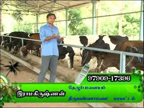 Dairy farm in tamil nadu-BDF
