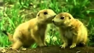 The Living Planet BBC   Seas Of Grass David Attenborough