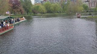 2017-02-12 (still snow covered) vs 2017-03-26 (dry like having a drought) vs 2017-05-07 (the pond is filled) at the pond inside the Boston Public Garden.  Quite a difference.Music: London_Bridge_instrumentalVideos were captured by: Samsung S7 Edge and S8+