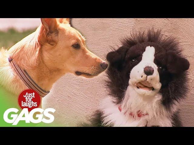 Stuffed Dog Attacks Real Dog  – Viral Video