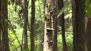 Sherbrooke Australia  City pictures : Sherbrooke Forest Victoria, Australia