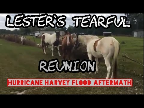 Man breaks down after finding some of his animals alive after the hurricane