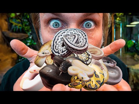 BEST BABY SNAKES WE HATCHED THIS YEAR UPDATE!! | BRIAN BARCZYK
