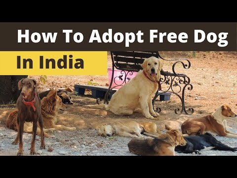How To Adopt Dog In India I Process Of Adopting Free Dog In India L Free Street Dogs For Adoption
