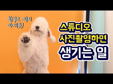 강아지 프로필 사진촬영하면 생기는일! / What happens when you take a picture of a dog - Thời lượng: 3 phút, 38 giây.