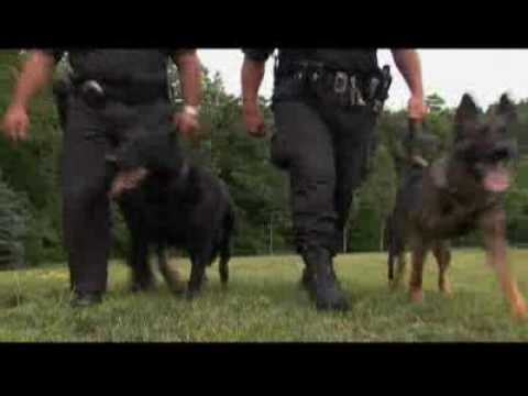 Rin Tin Tin To Police Dogs The German Shepard