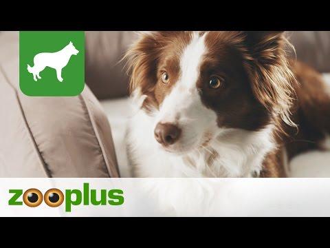 Hundebett | Orthopädisches Hundesofa | zooplus