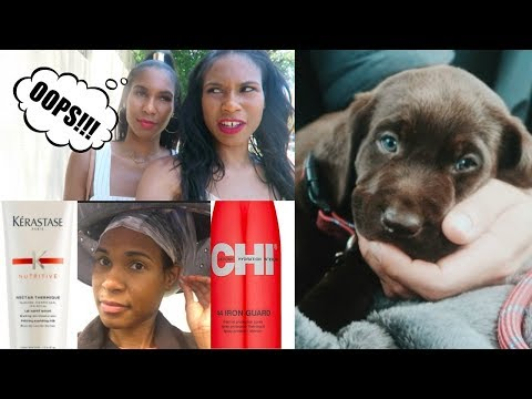 Hair salon - Chocolate Lab Puppy Comes Home, My BeautyCon LA MISTAKE, Salon Visit Update