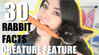 30 AMAZING RABBIT FACTS | CREATURE FEATURE by Emzotic