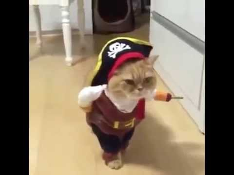 Chat deguise pour Halloween