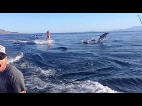 一大群海豚和比基尼美女在衝浪~這畫面也太美了!
