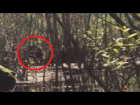 Lettuce Lake Park (Florida) Bigfoot Sighting