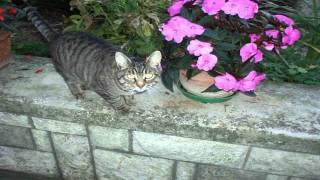 Macja Le Të Lahet - Këngë Për Fëmijë   [HD]