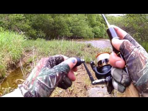 ловля змееголова во владивостоке