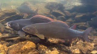 Супер рыбалка на Сухой пит 2010 7 июля