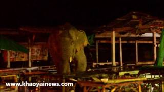 Wild elephants go  shopping in the local  market