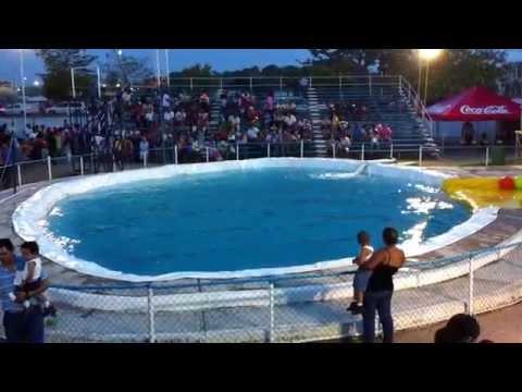 Espectaculo de Delfines #1