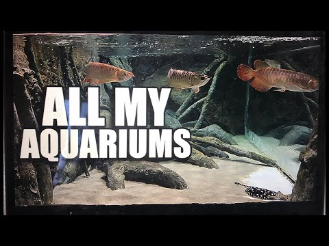 ALL MY AQUARIUMS - LIVE WITH MY WIFE!!!