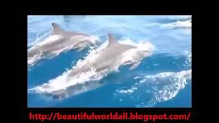Kalpitiya Sri Lanka  city images : Kalpitiya Dolphins Watching - Sri Lanka