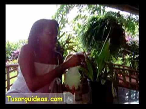 Orquideas. Como preparar el abono que necesitan