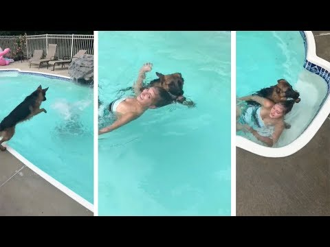 Dog Rescues 'Drowning' Owner From Pool